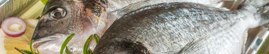 PPHU BMC Władysławowo - Ryby świeże i mrożone